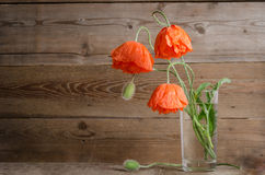 Bouquet of poppies in glass vase Royalty Free Stock Photo