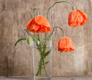 Bouquet of poppies in glass vase Royalty Free Stock Photography