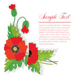Bouquet of poppies Royalty Free Stock Image