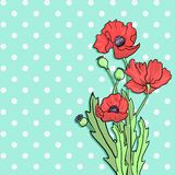 Bouquet of poppy flowers Stock Images