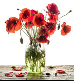Bouquet of poppy flowers in the vase on the wood. Stock Photography