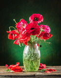Bouquet of poppy flowers in the vase. Stock Photo