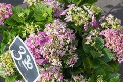 bouquet pour le jour de mères Photos stock