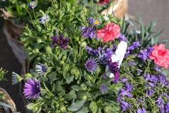 bouquet pour le jour de mères Images stock