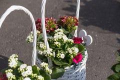 bouquet pour le jour de mères Photographie stock libre de droits