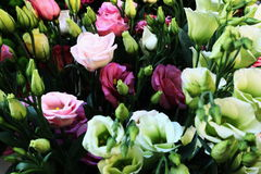 A bouquet of pretty colored roses Stock Images