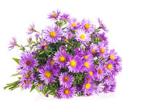 Bouquet Purple autumn flowers Stock Photos