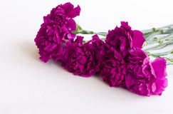 Bouquet of purple carnations Royalty Free Stock Photos