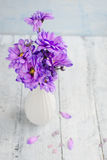 Bouquet of purple chrysanthemums Royalty Free Stock Images
