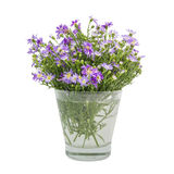 Bouquet purple daisy in vase Royalty Free Stock Images