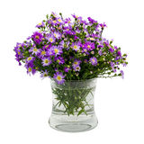 Bouquet purple daisy in vase Stock Image