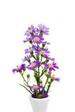 Bouquet purple daisy in vase Stock Photo