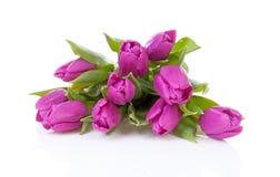 Bouquet of purple Dutch tulips Stock Image