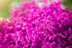 Bouquet of purple flowers royalty free stock photos