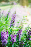 Bouquet of purple flowers under the sunshine Royalty Free Stock Photos