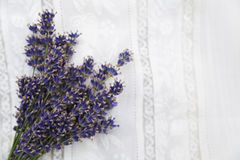 Bouquet of purple fresh lavender on white lace cloth Royalty Free Stock Image