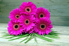 Bouquet of purple gerber on a wooden table Stock Photos