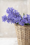 Bouquet of purple hyacinths Royalty Free Stock Photo