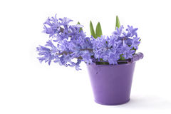 Bouquet of purple hyacinths Stock Photography
