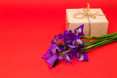 Bouquet of purple iris flowers and a gift on a red background Stock Image