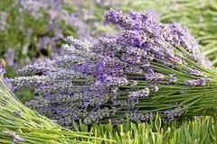 Bouquet of Purple Lavender Stock Photos