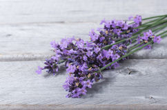 Bouquet of purple lavenders Royalty Free Stock Photos