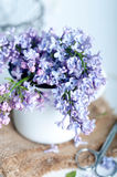 Bouquet of purple lilac spring flowers Stock Image