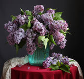 Bouquet of purple lilacs Royalty Free Stock Images