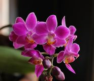 Bouquet  of purple  orchid flowers. This is a wonderful bouquet of  orchids flowers from Brazil Stock Photo