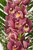 Bouquet of purple orchids Stock Image