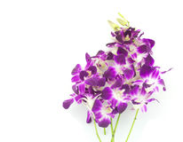 Bouquet of purple orchids isolated on white background.  Stock Image