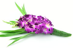 Bouquet of purple orchids isolated on white background.  Stock Images