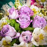 Bouquet of purple roses. With white flowers around it royalty free stock images