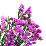 Bouquet from purple statice flowers isolated on white background Royalty Free Stock Images