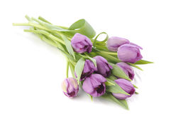 A bouquet of purple tulips. Isolated on a white background Stock Photos