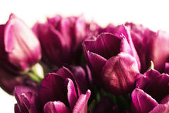 Bouquet of purple tulips Royalty Free Stock Image
