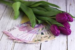 Bouquet of purple tulips and  Ukrainian national currency hryvnia, money - a gift for the holiday, concept.  royalty free stock images