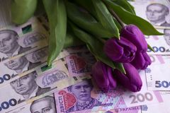 Bouquet of purple tulips and  Ukrainian national currency hryvnia, money - a gift for the holiday, concept.  stock image