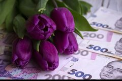 Bouquet of purple tulips and  Ukrainian national currency hryvnia, money - a gift for the holiday, concept.  royalty free stock photography