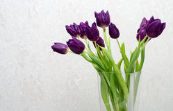 Bouquet of purple tulips in a vase Royalty Free Stock Image