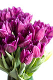 Bouquet of purple tulips Royalty Free Stock Photography