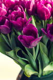 Bouquet of purple tulips Royalty Free Stock Photo