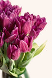 Bouquet of purple tulips Royalty Free Stock Images