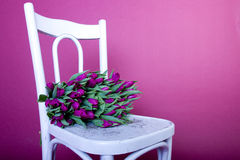 Bouquet of purple tulips on white chair Royalty Free Stock Photos