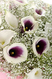 Flowers: bouquet of callas and gypsophila Royalty Free Stock Photos