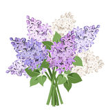 Bouquet of purple and white lilac flowers. Vector illustration. Royalty Free Stock Photo