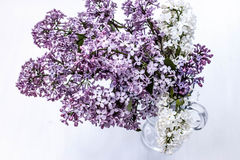 Bouquet of purple and white lilac in a glass wineglass. Bouquet of purple lilac in a glass wineglass Royalty Free Stock Photography