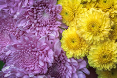 Bouquet  purple and yellow chrysanthemum Stock Image