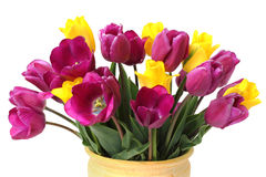 Bouquet of Purple and Yellow Tulips on White Royalty Free Stock Photo