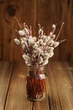 Bouquet of pussy willow twigs in glass jar on wooden background Royalty Free Stock Image